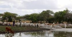 Climate Forecasts could help drought-hit herders make smarter moves