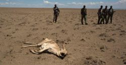 As droughts worsen, joined-up adaptations build resilience in arid Kenya