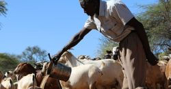 Sand dams quench the thirst of water-short Kenyans