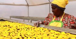 Kenya's Women Farmers Get Business Boost From Weather Texts