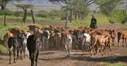Climate fund project transforming lives in Kenya